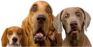 dogs shocked